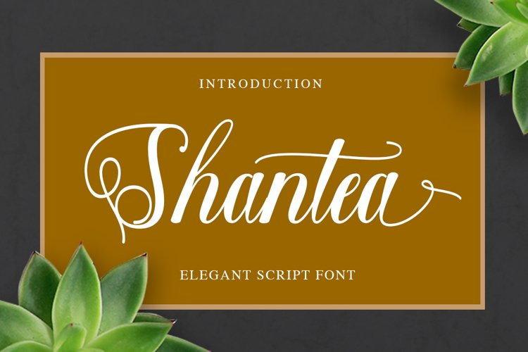 Shantea Script example image 1
