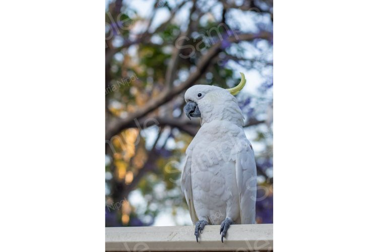 Cockatoo on a fence