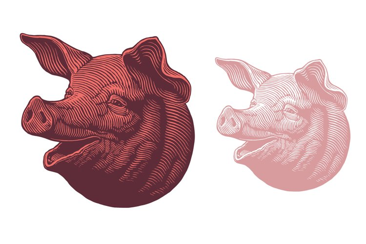 Pig's head. Hand drawn illustration. Vector engraving. example image 1