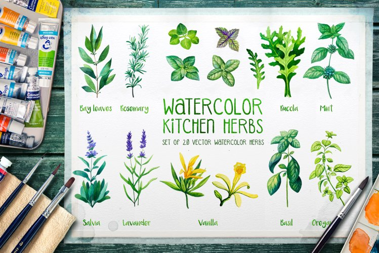 Watercolor Herbs example image 1
