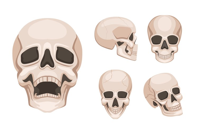 Human skull at different sides. Vector monochrome pictures example image 1