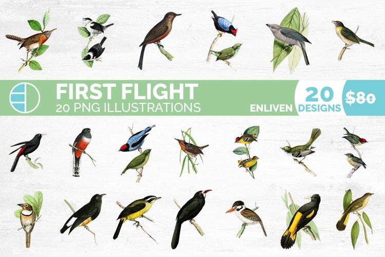 Birds Bundle Vintage Clipart Set example image 1