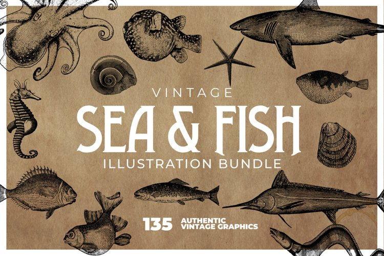 135 Sea Creatures and Fish Illustrations example image 1
