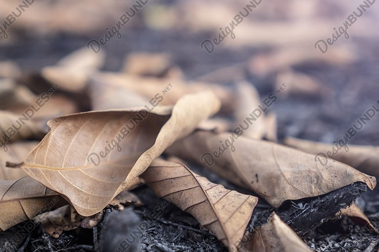 Dry leaves on the ground example image 1