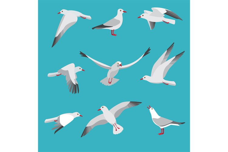 Atlantic seagull in different action poses. Cartoon flying b example image 1