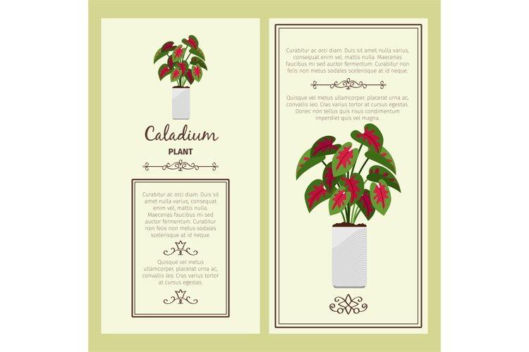 Greeting card with caladium plant example image 1