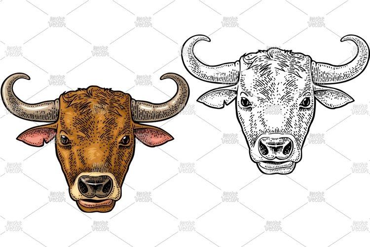Bull head. Vintage color vector engraving example image 1