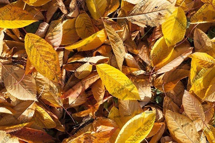 autumn foliage example image 1