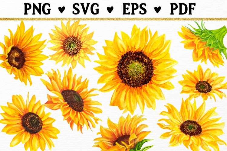 9 Watercolor Sunflowers SVG Floral Clipart