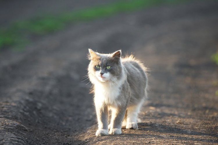 grey cat in nature example image 1