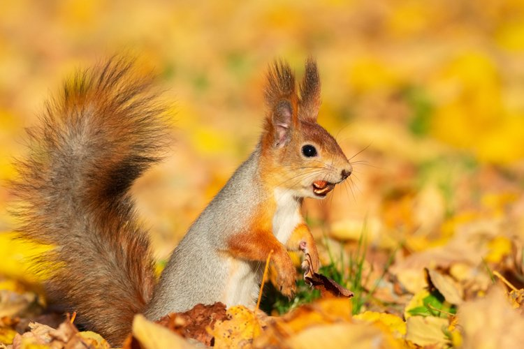 squirrel in autumn Park example image 1