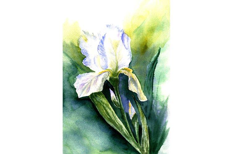 sketch Iris example image 1