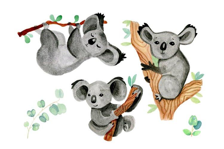koalas and eucalyptus watercolor cute illustrations