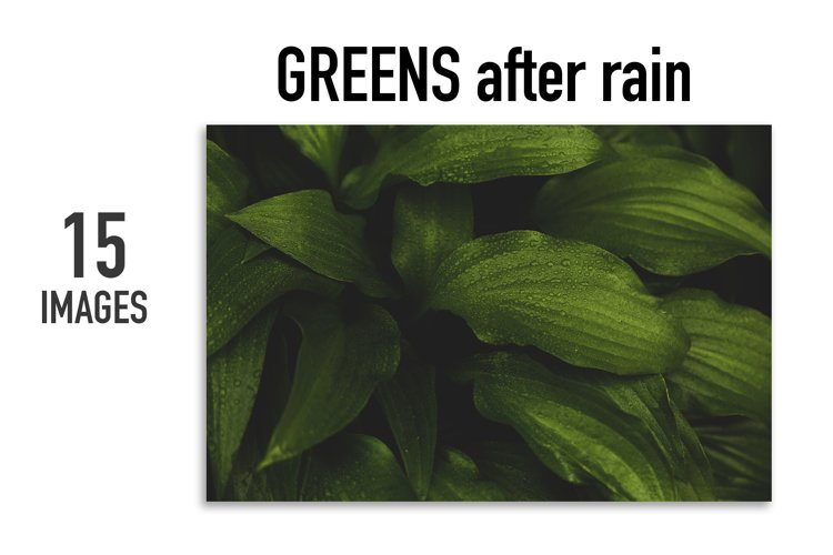 Greens after rain. 15 images BUNDLE example image 1