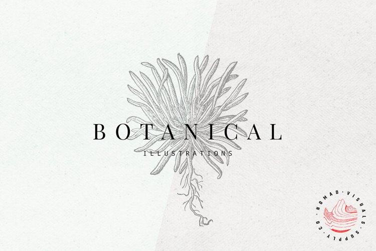 Premium Botanical Illustrations - Plants example image 1
