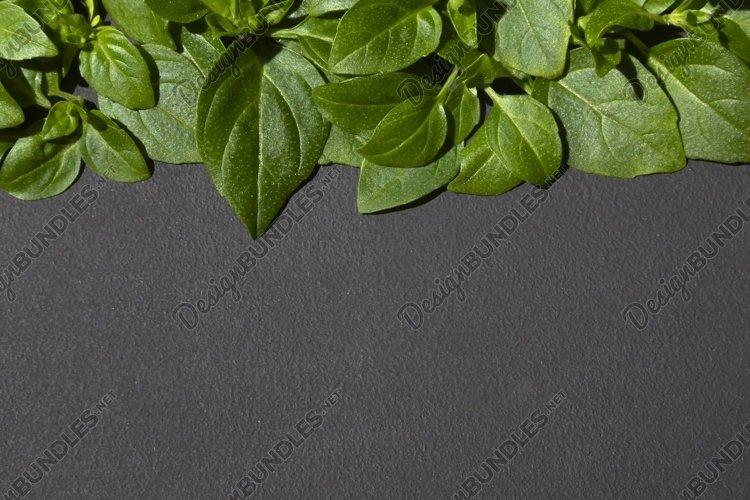 Basil leaves border on dark background.