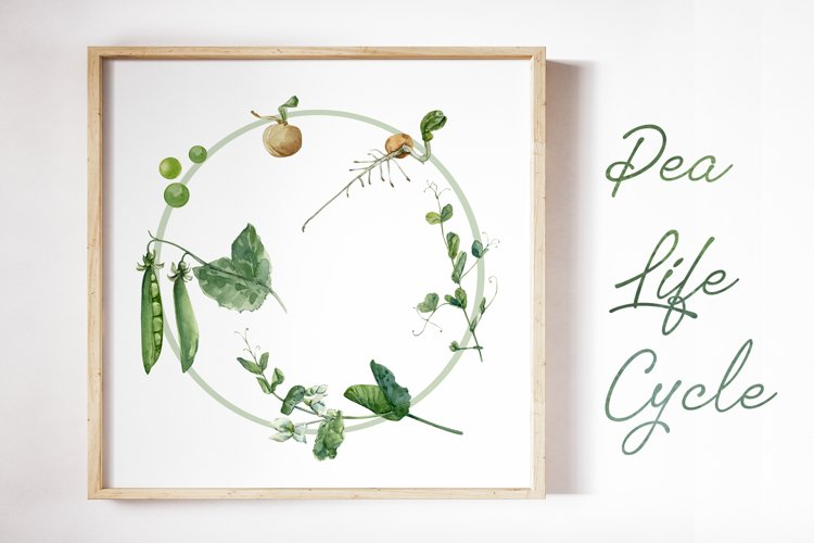 Plant Life Cycle Clip Art and Print