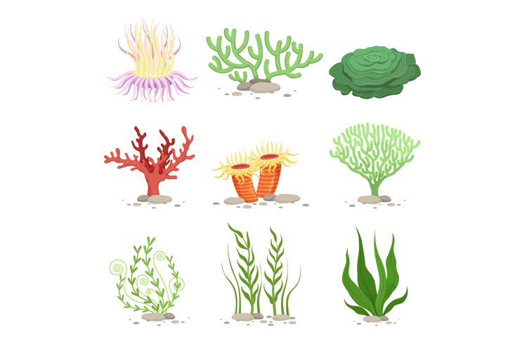 Vector set of underwater plants. Funny illustrations in cart example image 1