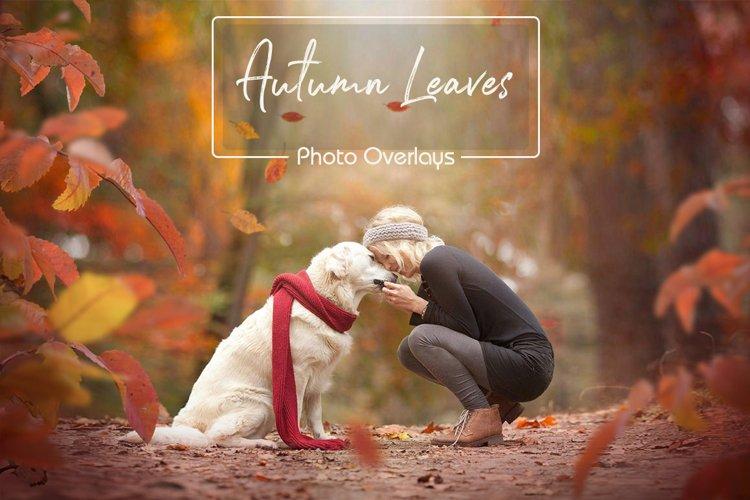 Autumn Leaves Overlays example image 1
