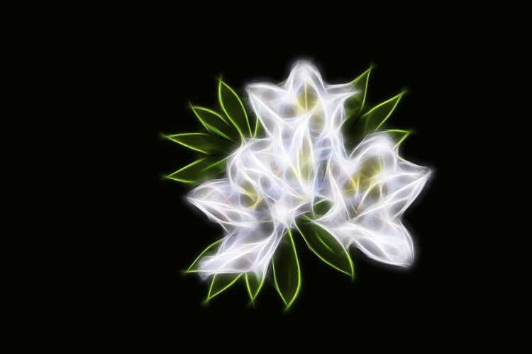 Abstract fractal white flowers on black isolated background example image 1