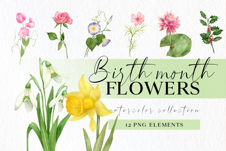Birth month flower png clipart, botanical floral clip art