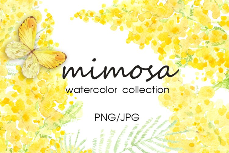 Mimosa. Watercolor collection. example image 1