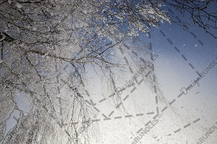 Snow-covered and hoarfrost birch example image 1