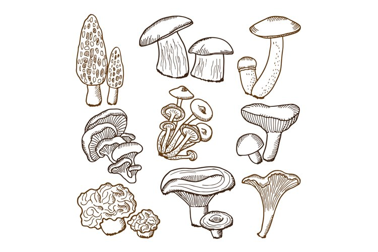 Forest mushrooms in hand drawn style. Vector illustrations example image 1