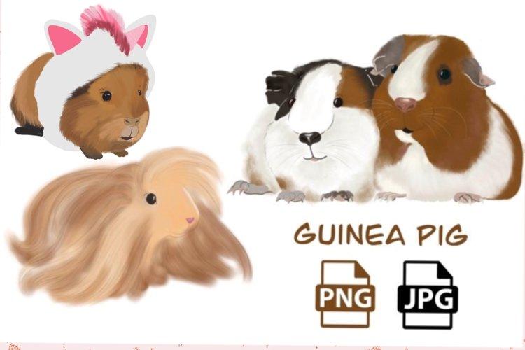 guinea pig illustration example image 1