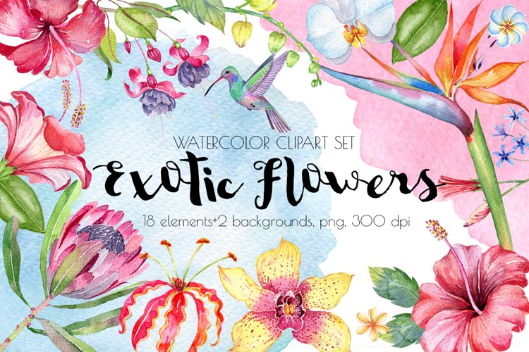 Exotic Flowers Clipart,Tropical Flowers,Beach Wedding example image 1