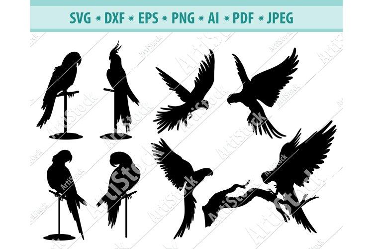 Parrot Svg, Parrot Clipart, Pet Svg, Wild bird Png, Dxf, Eps