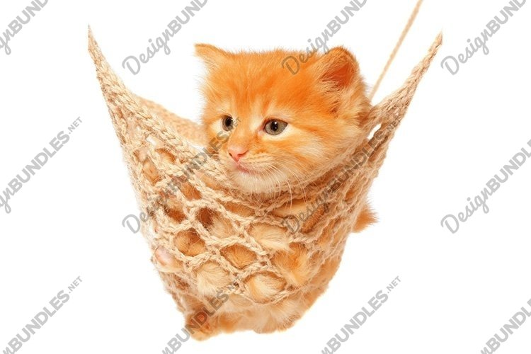 Stock Photo - Cute red haired kitten in hammock example image 1