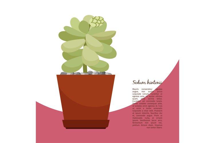 Sedum hintonii plant in pot banner example image 1