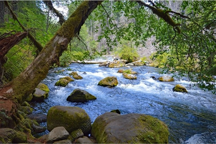 Stock Photo, Forest, River, Oregon example image 1