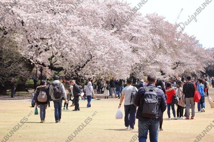 Shinjuku Gyoen National Gardens example image 1