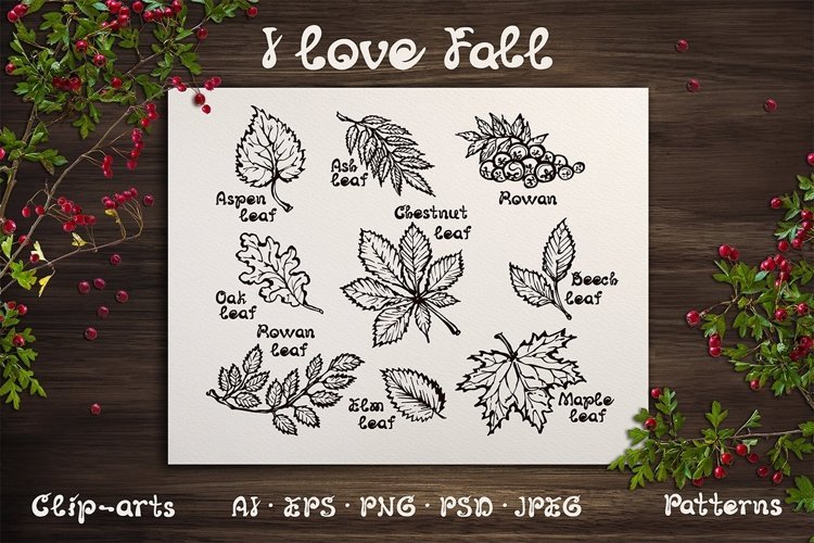 Hand drawn fall leaves | SVG AI EPS PNG PSD JPEG example image 1