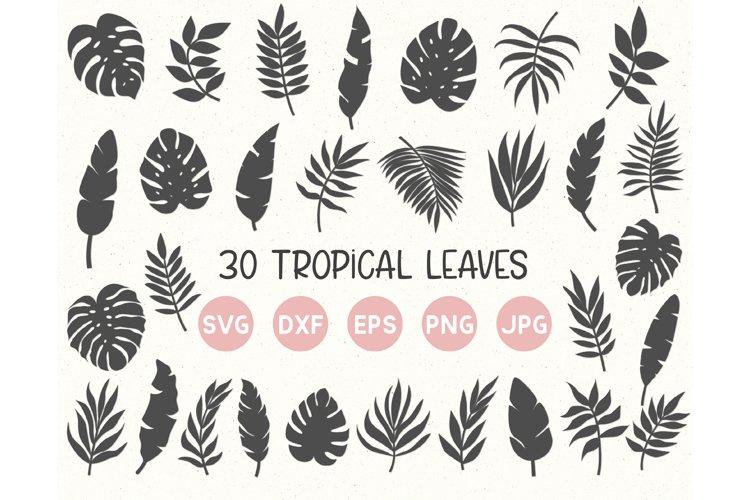Tropical Leaves Svg Bundle, Palm Leaves Svg, Jungle leaves