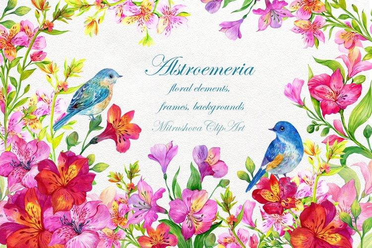 Alstroemeria flowers Clipart Watercolor, floral elements,