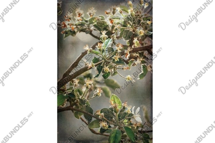 Blooming spring apple orchard example image 1