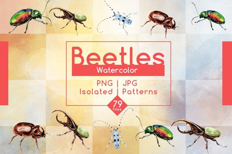 Beetles JPG watercolor set  example image 1