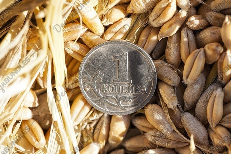 Russian coins on an agricultural field example image 1
