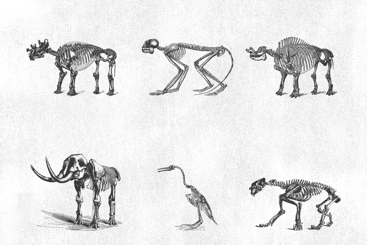Paleontology Vintage Vector Illustrations 150 Items example 1