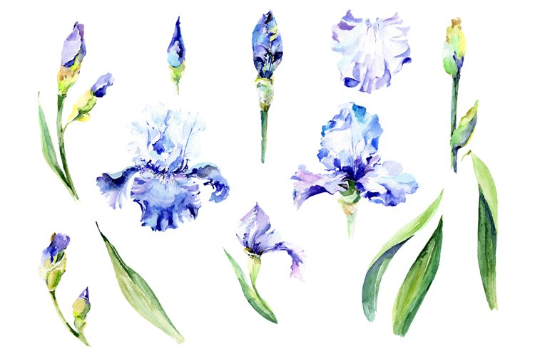 Irises blue Summer sky watercolor png example image 1