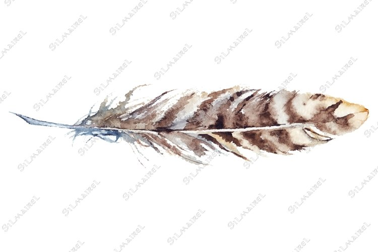 Watercolor brown stripe single feather vector isolated example image 1