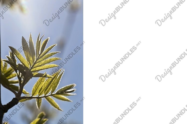 the first green foliage example image 1