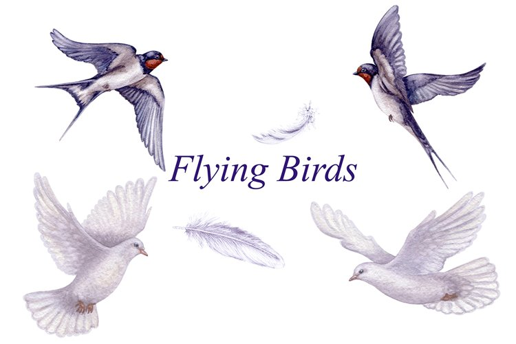 Flying Swallows and Doves