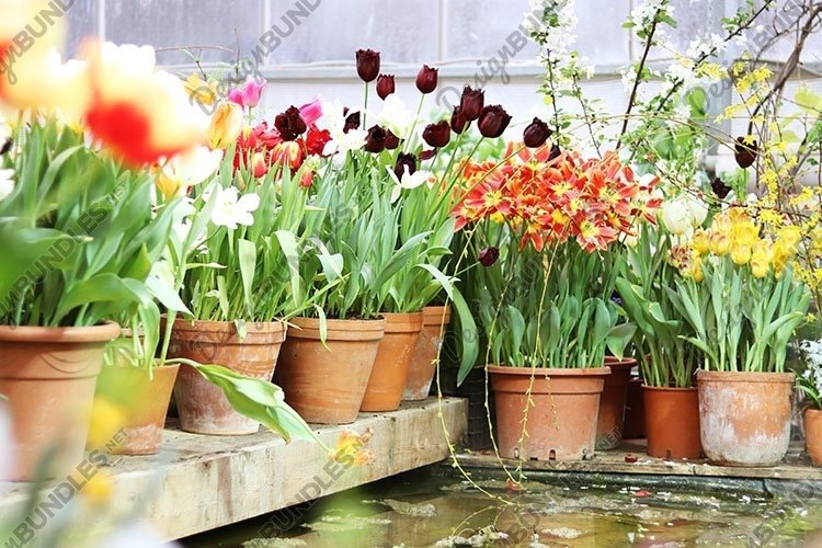 spring flowers in pots in the store example image 1