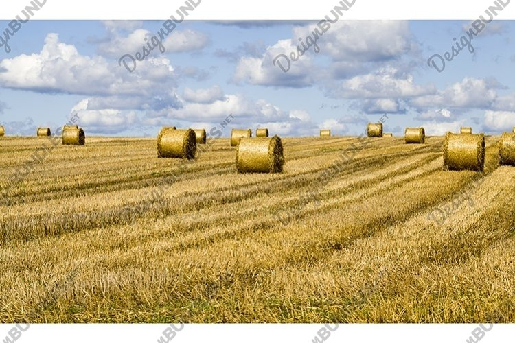 agricultural field after harvesting rye for food example image 1