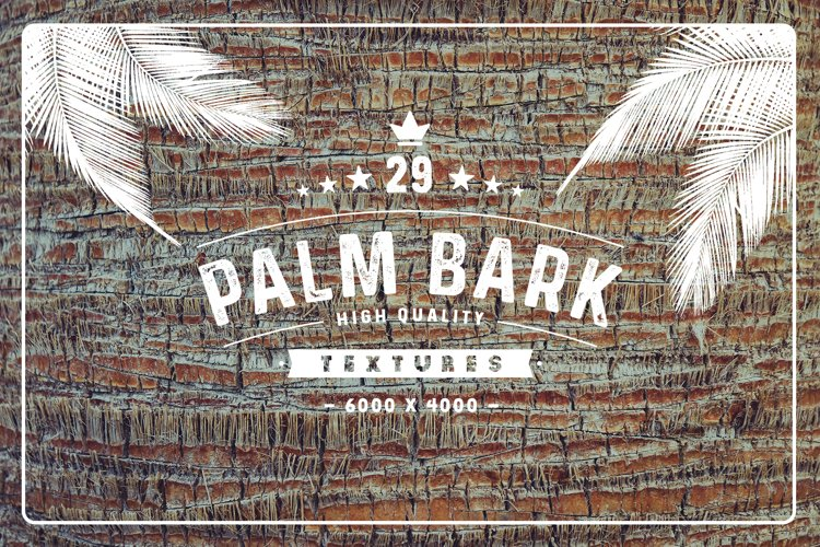 29 Palm Bark Textures example image 1