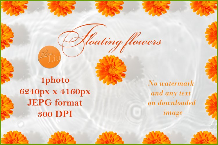 Marigold petals with drop floating on surface of water example image 1